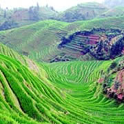 1000-year-old Long Sheng Rice Terraces